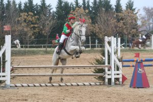 Marechal cheval de club ecuries sir c